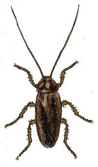 Kakerlakk ikke ut av øret med støvsuger | Finansavisen