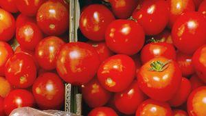 2020 ble et bra år for tomatdyrker på Hanasand